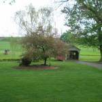 bridge-tree