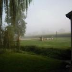 play-train-fog