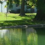 pond-edge